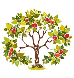 fruitful apple tree vector image vector image