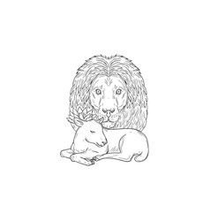 Lion watching over sleeping lamb drawing vector