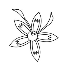 Flower daylily beautiful flora thin line vector