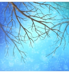 Winter tree branches vector