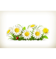 Daisies in grass vector image