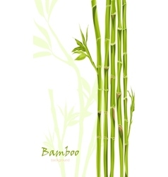 Hand-drawn green bamboo bacground with space for vector