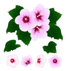 hibiscus syriacus - rose of sharon vector image vector image