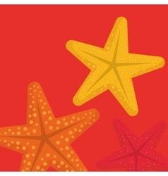 sea star beach vector image vector image
