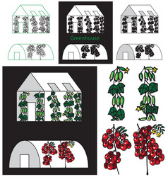 Cucumbers and tomatoes greenhouse vector