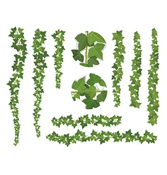 Set of brushes ivy vine branches vector