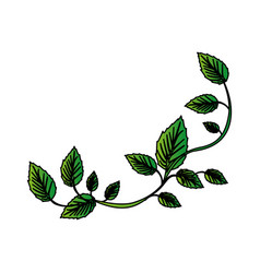 White background with colorful green creeper vector