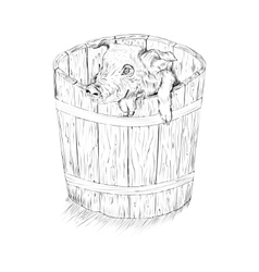pig in the bucket vector image