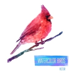 Watercolor bird cardinal on the branch hand vector