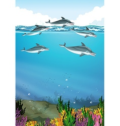 Dolphins swimming in the ocean vector image vector image