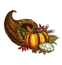 thanksgiving day cornucopia sketch harvest vector image