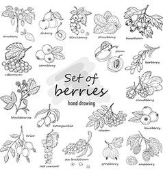 Collection of garden and wild berries in sketch vector