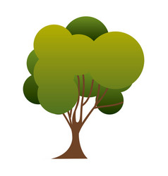 Colorful silhouette green tree nature icon with vector