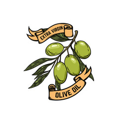 extra virgin olive oil olives on white background vector image vector image