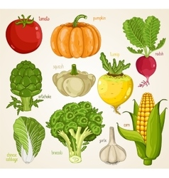 Vegetables mix organic food farm food vector