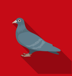 Pigeon icon in flate style isolated on white vector