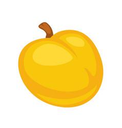 Small fresh apricot vector