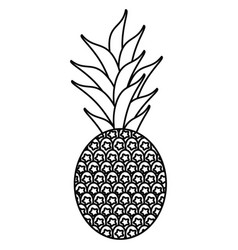 Sweet pineapple tropical fruit thin line vector