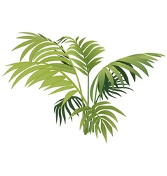 Fern plant vector