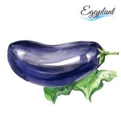 Watercolor eggplant vector image vector image