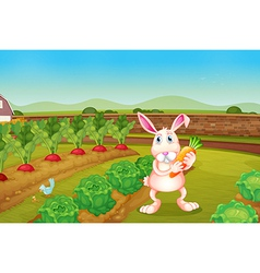 A bunny holding a carrot along the garden vector