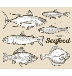 Seafood hand drawn sketch of vector