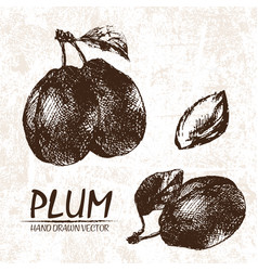 Digital detailed plum hand drawn vector