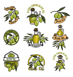 set of olive oil emblems olive branch vector image vector image