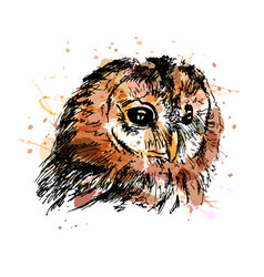 Colored hand sketch owl head vector