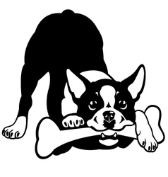 Boston terrier black and white vector