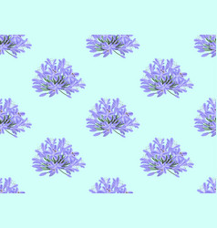 blue purple agapanthus on light blue background vector image