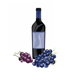 Bottle of Red Wine and grapes vector image vector image