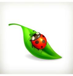Ladybug on green leaf vector image