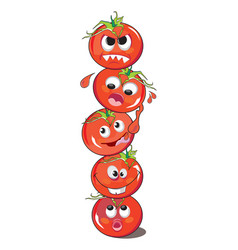 tomato or solanum lycopersicum vector image vector image