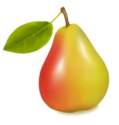 pear with leaf vector image
