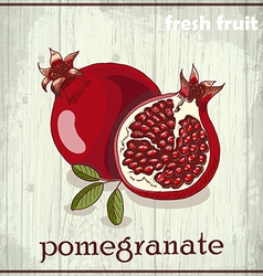 Hand drawing of pomegranate fresh fruit sketch vector