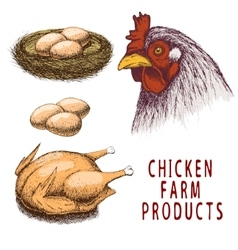 Set of chicken farm products vector