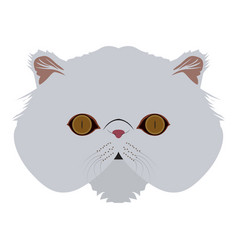 isolated persian cat vector image vector image