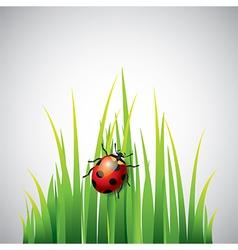 ladybug grass vector image