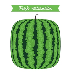 Square Fresh Watermelon vector image