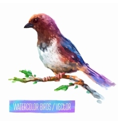 Watercolor style of bird vector