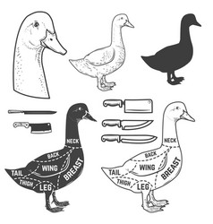 Goose cuts butcher diagram design element for vector