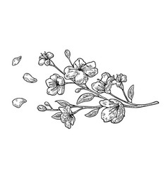 Sakura blossom cherry branch with flowers and bud vector