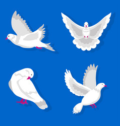 White pigeons in various poses isolated on blue vector