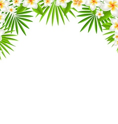 Border from frangipani vector