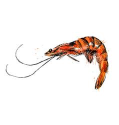 Colored hand sketch shrimp vector