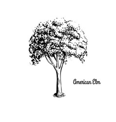 sketch tree vector image vector image