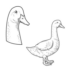Set of goose icons isolated on white background vector