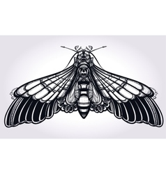 Butterfly moth hand drawn linear style vector