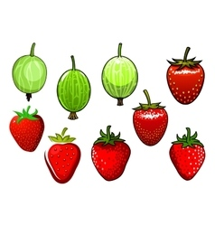 Fresh red strawberry and green gooseberry vector
